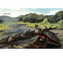 Painted Turtle - WITH Text Photographic Print