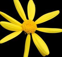 yellow daisy Sticker