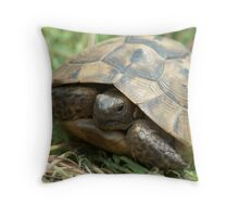 Central Asian tortoise (Agrionemys horsfieldii) Throw Pillow
