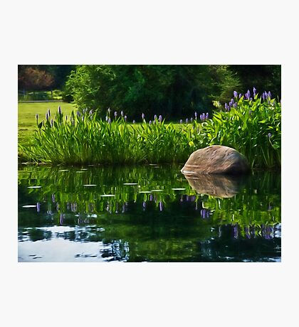 Pickerel at the Pond Photographic Print
