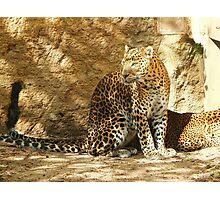 Panther of Sri Lanka Photographic Print