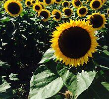 Sunflower Garden by fallonroher