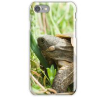 Tortoise that eat grass iPhone Case/Skin