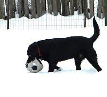Snow Games by DustysPhotos
