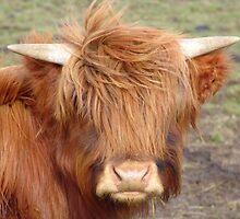 Highland Beastie! by weecritter