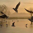 Birds by Kasia Nowak