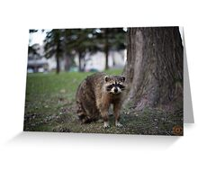 """Defiance"" - Raccoon portrait Greeting Card"