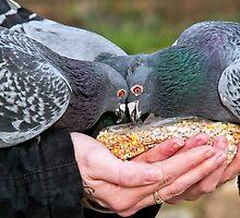 Feeding The Pigeons by Susie Peek