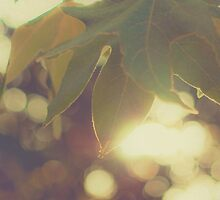 Green Leaf Bokeh by Honey Malek