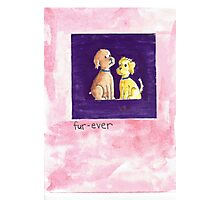 Fur-Ever Greeting Card & Gifts Photographic Print