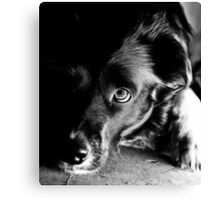 A Faithful Friend Canvas Print