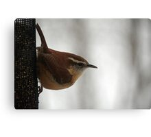 Hungry Wren Canvas Print