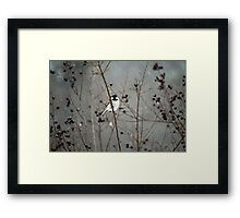 Chilly Chick-a-Dee Framed Print