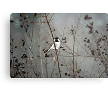 Chilly Chick-a-Dee Metal Print