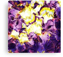 Iris Flower Petals Abstract  Canvas Print