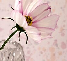 Pink Cosmo - Digital Oil Art Work by Sandra Foster