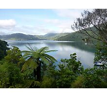 Marlborough Sounds, New Zealand Photographic Print