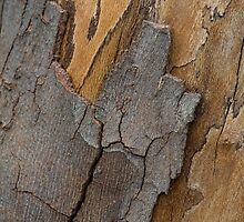 Tree Bark and Trunk Textures by Gerda Grice