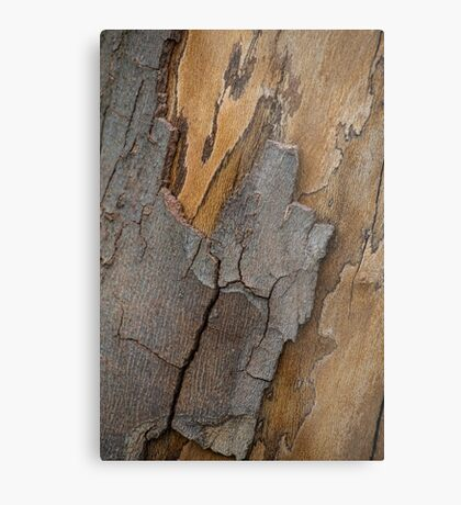 Tree Bark and Trunk Textures Metal Print