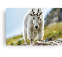 The Ups and Downs of Being a Mountain Goat, No. 3 Canvas Print