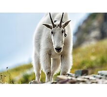 The Ups and Downs of Being a Mountain Goat, No. 3 Photographic Print