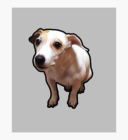 Gnar Jack Russell Terrier Photographic Print