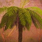 In The Mist - Mount Wilson and Mount Irvine NSW Tree Fern  - The HDR Experience by Philip Johnson