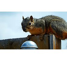 SQUIRREL ON A WOODEN FENCE Photographic Print