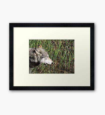 Little Reed Framed Print