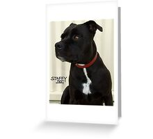Staffy and Proud Greeting Card