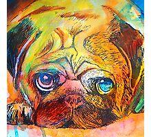 Mr Pug Pop Art  Photographic Print