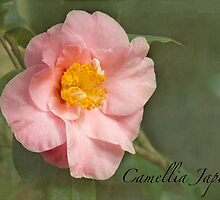 Camellia Japonica by Marilyn Cornwell