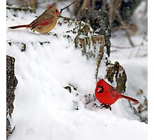 Mr and Mrs. Cardinal Photographic Print
