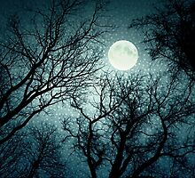 Dark enchanted photo of a full moon in the trees branches background. Blue fairy-tale colors by aquapixel