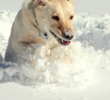 Labrador in Action Sticker