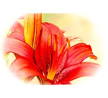 Lily 2 Photographic Print