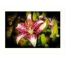 Lily 4 Art Print
