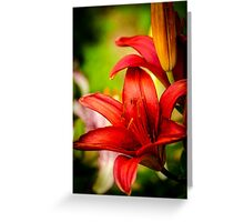 Lily 6 Greeting Card