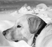 Dog Days by Valeria Lee