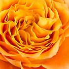Curly Petals Of Beauty by daphsam
