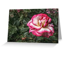 I Have Seen Roses Damasked Red and White Greeting Card