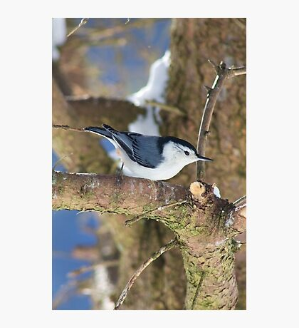 Little Bird on a Tree Photographic Print