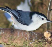 Little Bird on a Tree Sticker