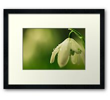 Snowdrop and raindrop Framed Print