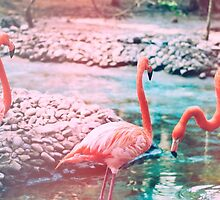 Exotic flamingos by Indea Vanmerllin