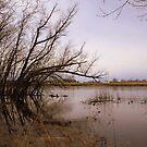 Mississippi River by Elizabeth  Lilja