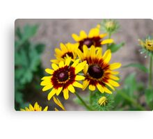 Red and Yellow Black Eyed Susan 1 Canvas Print