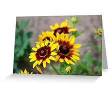 Red and Yellow Black Eyed Susan 1 Greeting Card