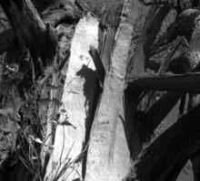 Scary Tree- Wine Shanty Track, Cleland Sticker