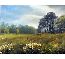 Landscape with daffodils Photographic Print